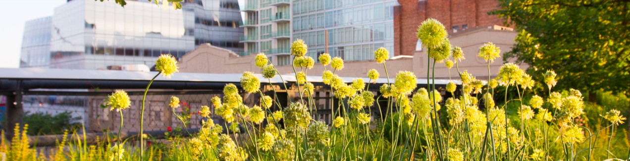 High Line Re-Opens on July 16
