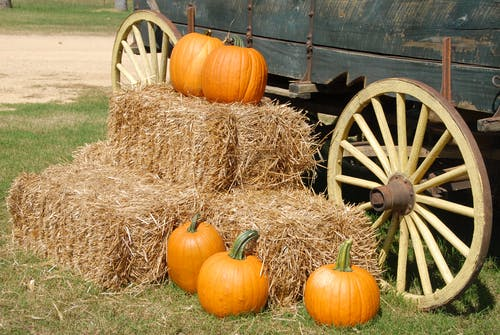 Halloween on the farm queens
