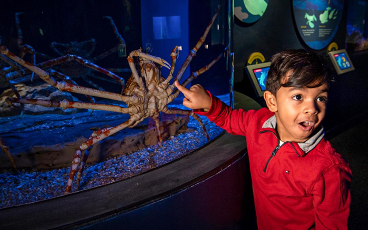 Spineless Exhibit at New York Aquarium