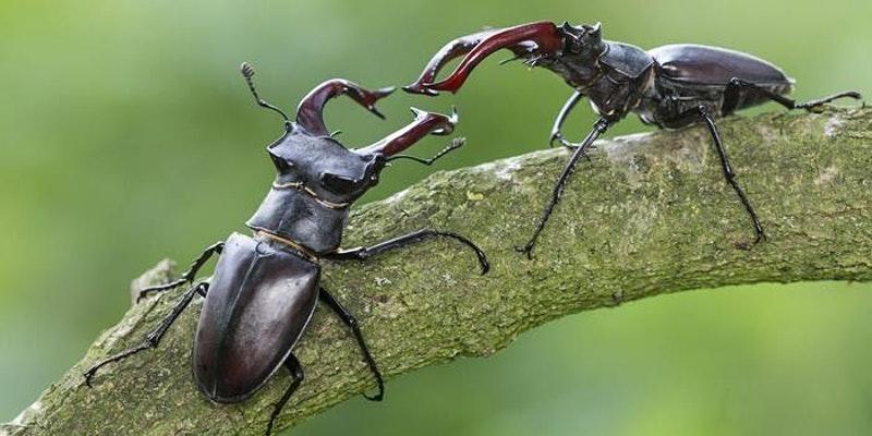 Greenbelt Bug Club