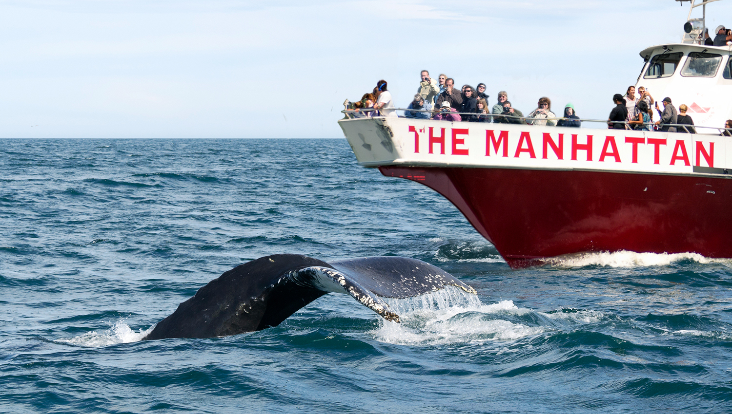 Whale Watching NYC Adventure Cruise